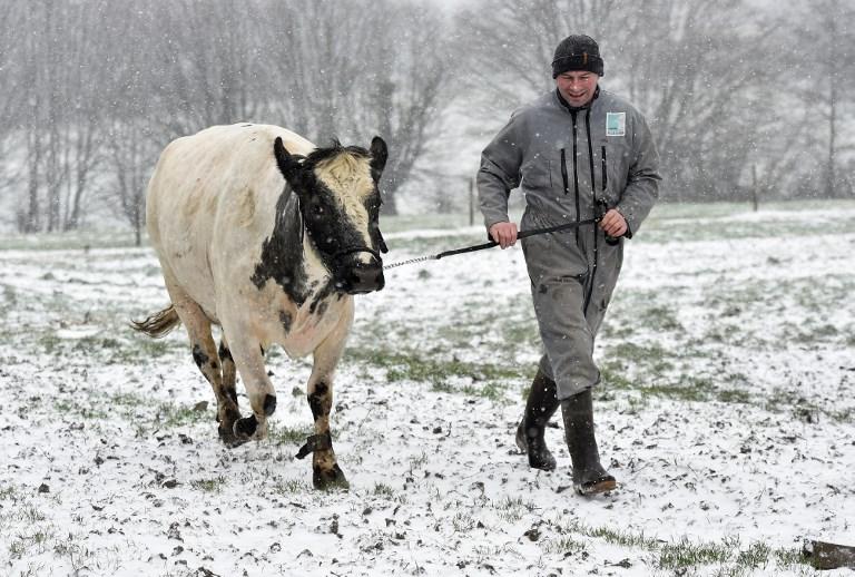site de rencontre de vache lois sur la datation des âges